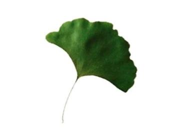 木叶在近代的发展